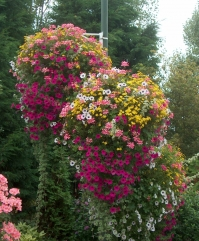 Hanging basket type Montefloris